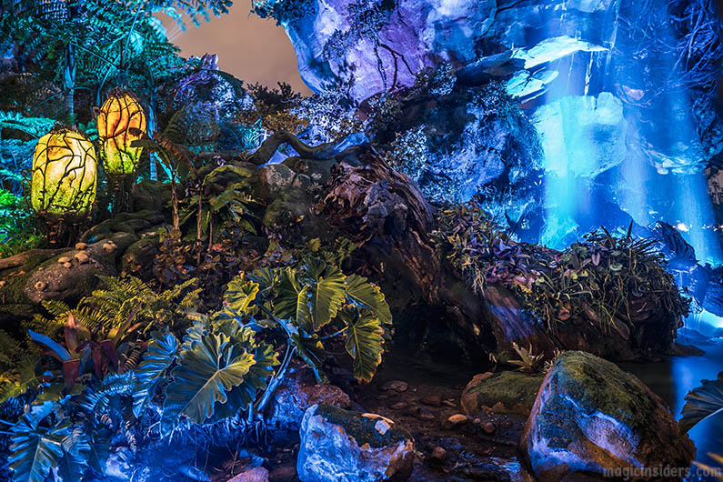 Best Time to See Pandora at Animal Kingdom