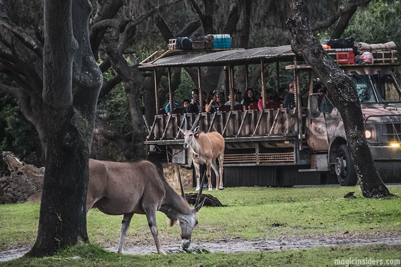The Best Time to Ride Kilimanjaro Safaris