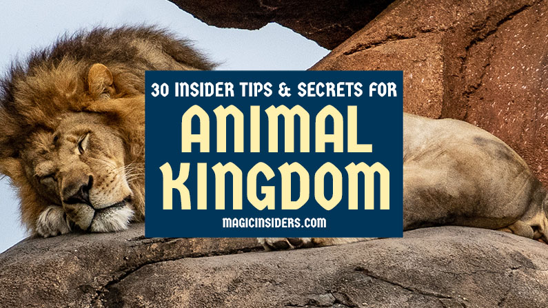 30 Animal Kingdom Tips & Secrets from Disney World Pros