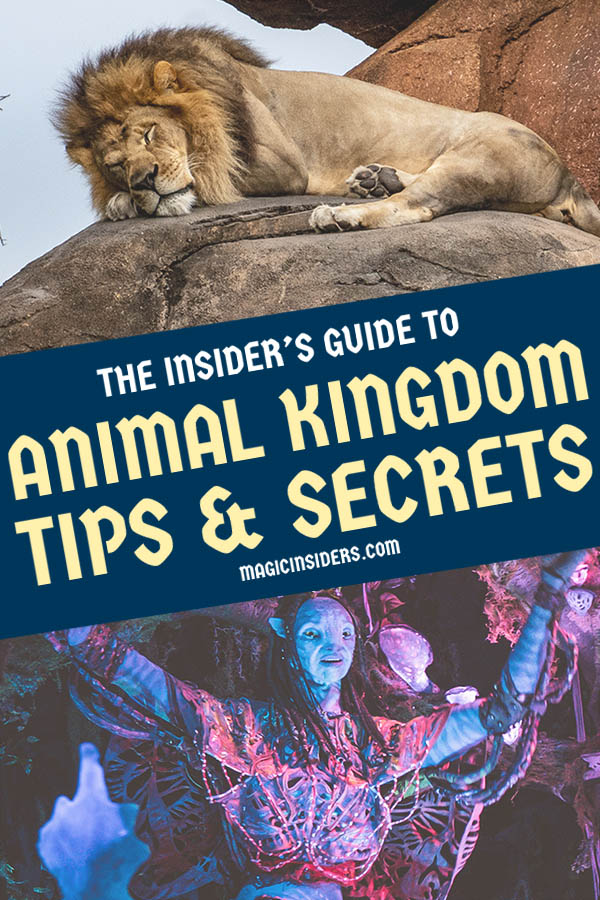 Animal Kingdom Tips & Secrets